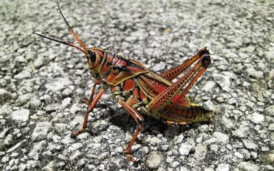 Locust by TWPictures