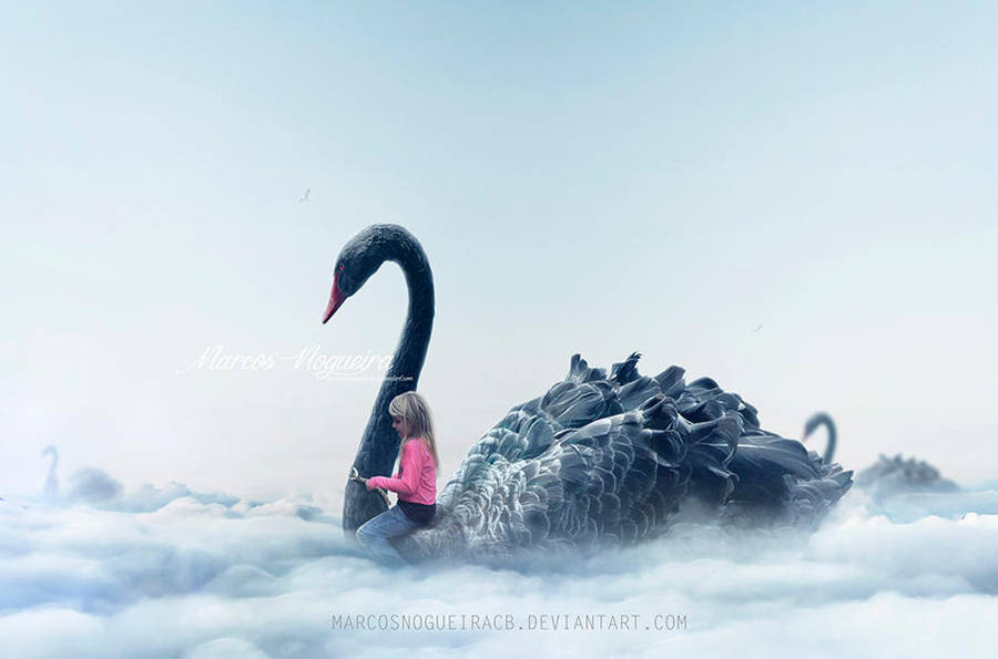 Swan ride by marcosnogueiracb