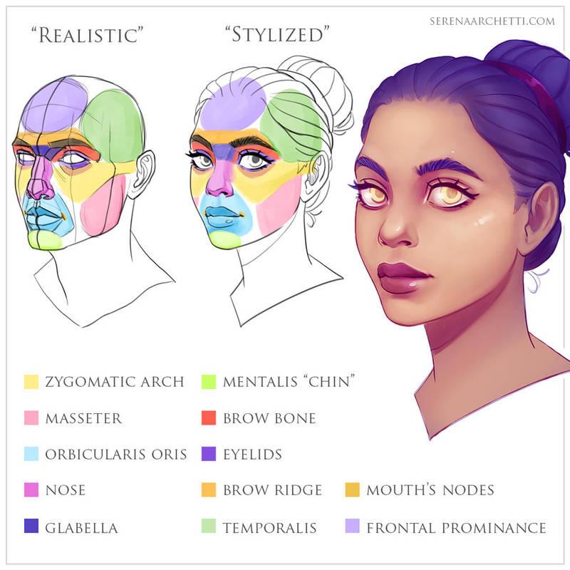 Stylized Face Anatomy Tutorial By Smilinweapon On Deviantart