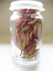 Seeds 1 by Noshay