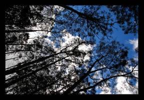 trees by lotusleaf