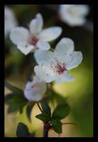 spring morning by lotusleaf