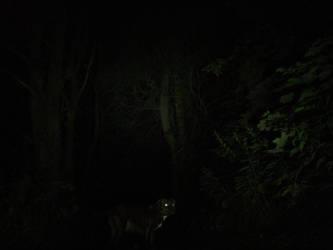 3:15Am woods by RainbowSelfHelpCafe