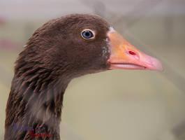 Goose by yesmeena