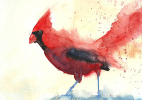 Red Cardinal bird by Medhi