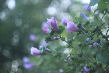 Flower after rain by BesQ