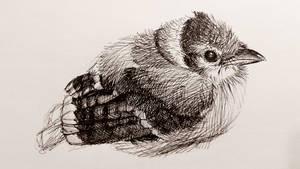 Inktober #30 Blue Jay by FudgedUpBird