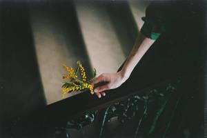 Acacia by NataliaDrepina