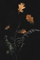 Autumn Defoliation by NataliaDrepina