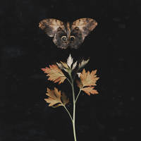 Fragile Autumn Wings by NataliaDrepina