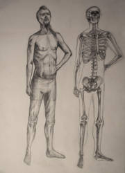 Male semi-nude life drawing. Skeleton study by zzSnowWhiteQueenzz