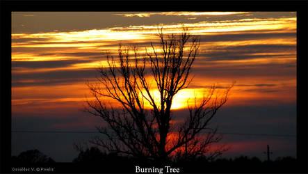 Burning Tree by Pixelis