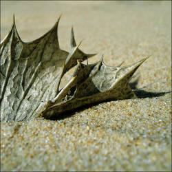 beach leaf - by anocas