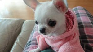 pink hood by DreamySilver