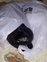 Lokitty In A Bag by Death-For-One