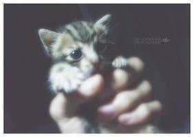 My Little Baby by OsmanKarter