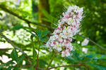Arboretum White Flowers 1 by AaronPlotkinPhoto