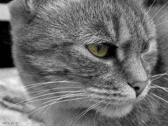 Kittie by Ozonizy