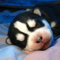 Puppy by indygo-sagita