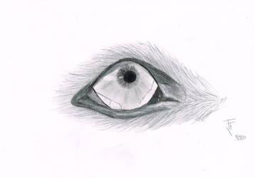 It's looking at me by kon-rocks
