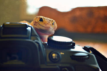 Smile! You're on Camera by RattusSkin