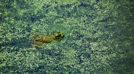 where's froggy? by xthumbtakx