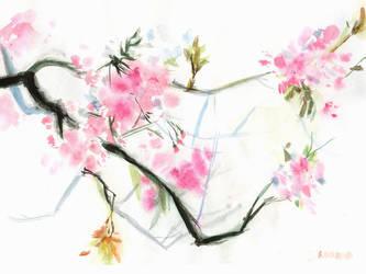 Sakura by Kurara-Shikaze