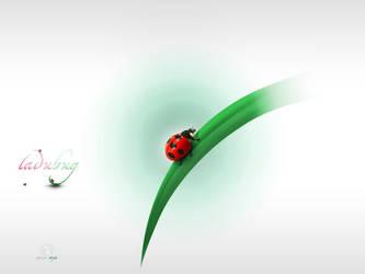 Ladybug by alnour