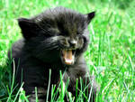 Sirius Black by gitarlyd