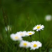 Sweet Simplicity by PaulDavis