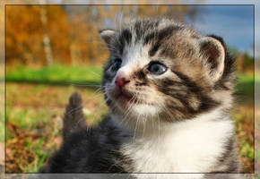 Missy, my kitten. by PiaBobacka