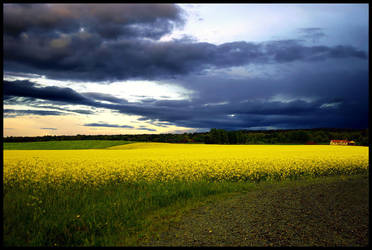 Painted fields by rde