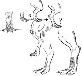 Dragon feet and leg practice by Blocko-maniac