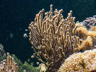 Underwater -  Koralle 4 by mrscats