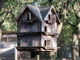 Birdshouse 1 by mrscats