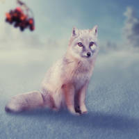 Waiting fox by mrscats