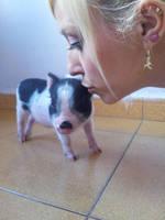 Baby piggy by itsukih