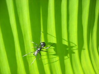 insekto by kitkat-kitkat