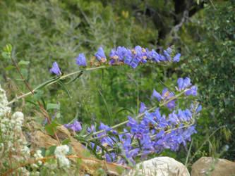 ROW Flora 2 by deviantdeeva