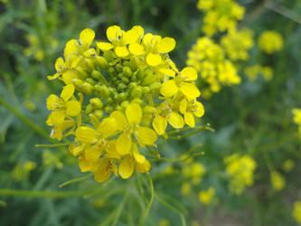 ROW Flora 4 by deviantdeeva