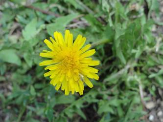 ROW Flora 5 by deviantdeeva