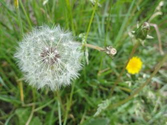 ROW Flora 6 by deviantdeeva