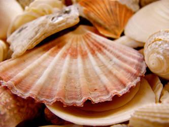 Shells by MissSpocks