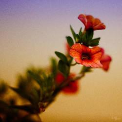 ~ springtime ~ by Tattoomaus78