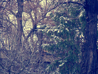 close trees by serialkillerstock