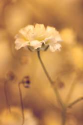Silent beauty by DragonflyAndromeda