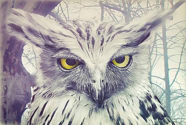 Owl by NAKVISELE