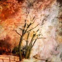 Orange Sky 5970 by DonnaMarie113