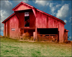 Horsey Eating in Barn by DonnaMarie113