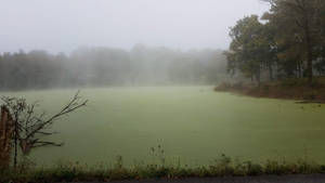 Green Slime on Pond with Fog 01 by DonnaMarie113